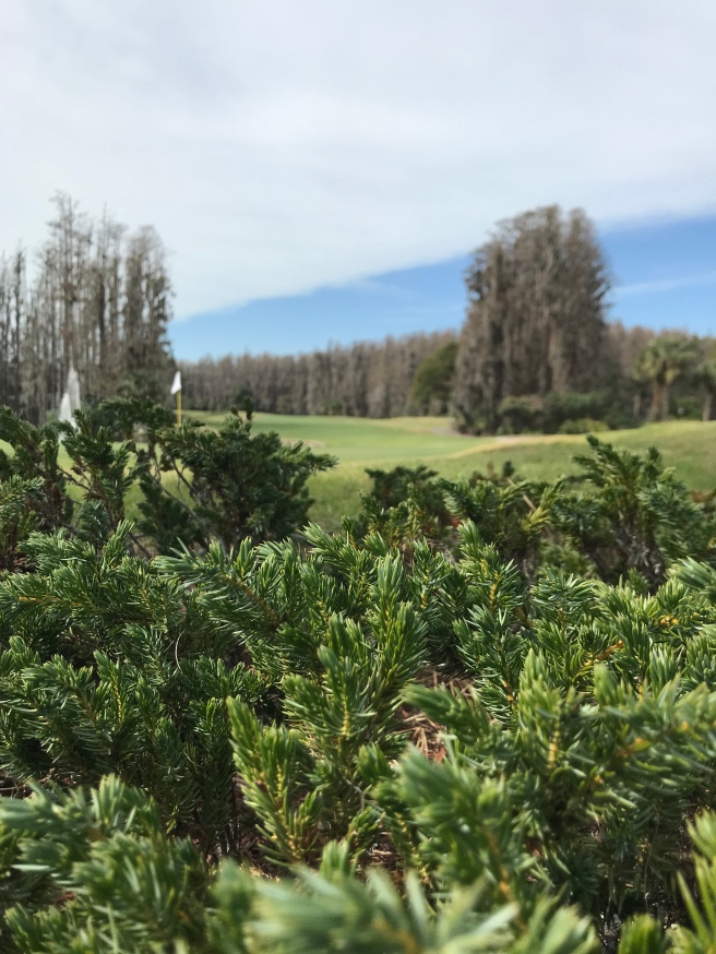 golf course at Saddlebrook Resort, Wesley Chapel, Florida